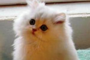 پیش بینی بسیار عجیب و جالب یک گربه !!!