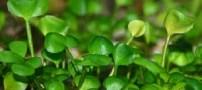 زیبایی هر چه بیشتر با مصرف این گیاهان