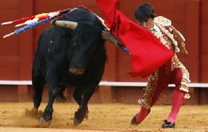 آیا واقعا گاوها به رنگ قرمز حساس هستند؟