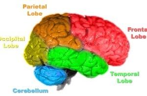 آیا می دانید مغز انسان چگونه کار می کند؟