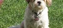 نجات ۴۳۰ سگ از دیگ جوشان رستوران ها