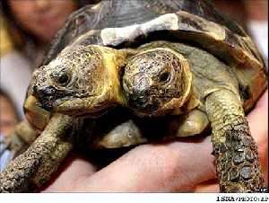 عجیب ترین لاكپشت جهان هنرپیشه می شود