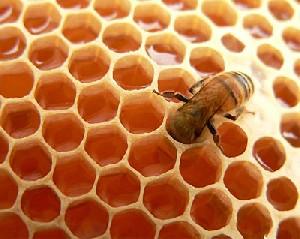 ضد عفونی کلیه ها با مصرف عسل