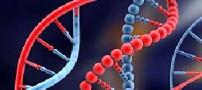 ارتباط ژن چاقی با بیماری کلسترول خون و دیابت