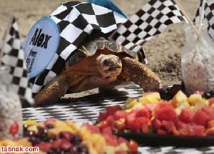برگزاری کندترین مسابقه ی دوی جهان