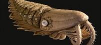 بزرگترین شکارچی دریایی پیش از عصر دایناسورها