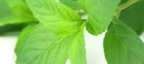 جلوگیری از رشد موهای زائد با چای نعناع