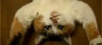 باور می کنید!! خوردن کباب گربه و مار در چین با لذت
