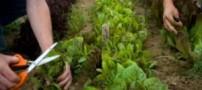 3 گیاه موثر برای نفخ شکم