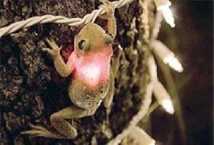 قورباغهای که  یک چراغ روشن را بلعید! +عکس