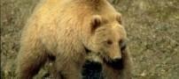 مرگ 2 نفر بر اثر سقوط خرس از آسمان روی ماشین!!