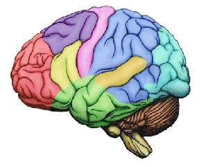 کاهش سریع حافظه قبل از مرگ