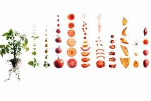 توصیه هایی برای سالم نگه داشتن خوراکی ها