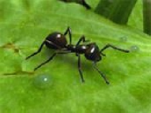 استفاده مورچهها از الگوریتم اینترنت