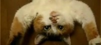 پخته شدن گربه بینوا توسط پسر بچه بازیگوش در فر!!