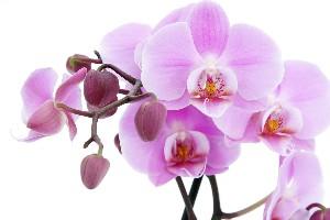 معانی گل های مختلف برای هدیه دادن به دیگران