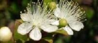گیاهی دارویی برای تقویت معده
