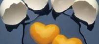 محافظت از قلب با مصرف تخم مرغ