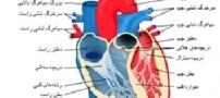 خطر گرفتگی رگ ها با درمان های ناباروری