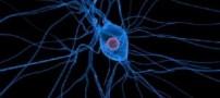 سلول های عصبی دریافت کننده اصلی نیکوتین