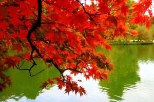 شگردهایی برای عکاسی در فصل زیبای پاییز