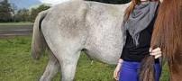 دزدیدن عجیب دم اسب ها توسط یک خانم! (+عکس)