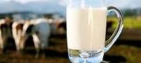 فواید نوشیدن شیر در سردترین فصل سال