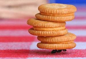 شگفتی های باورنکردنی از زندگی مورچه ها