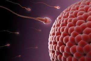 تآثیر رابطه جنسی در تخمک گذاری