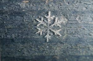 مواد مغذی مخصوص فصل زمستان