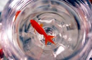آموزش روش های نگهداری از ماهی قرمز