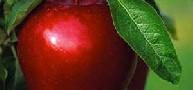 هر روز به کودکتان یک سیب بدهید