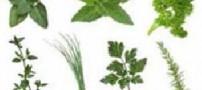 رفع یبوست به کمک گیاهان دارویی