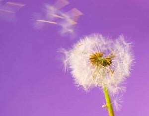 دانستنی هایی در مورد آلرژی در فصل بهار
