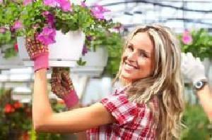چگونگی تمیز کردن گیاهان آپارتمانی