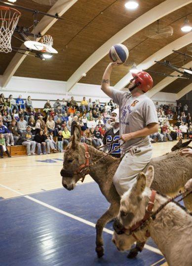 عکس از مسابقه بسکتبال الاغ ها