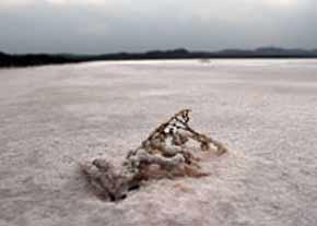 كشف زیستگاه انسانهای نخستین در ساحل دریاچه قم