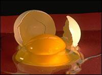 تخم مرغ یكی از غنی ترین منابع پوروتئین