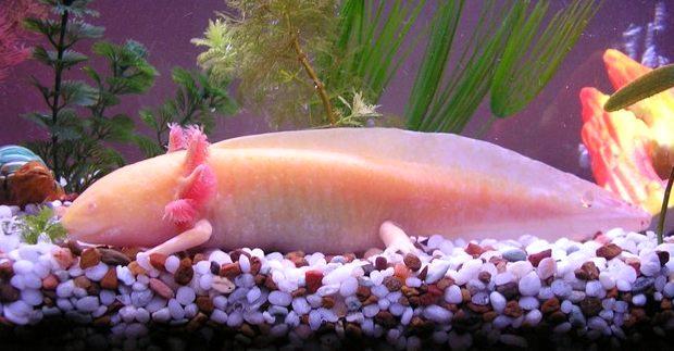 عجیب ترین ماهی دنیا که دست و پا دارد!!