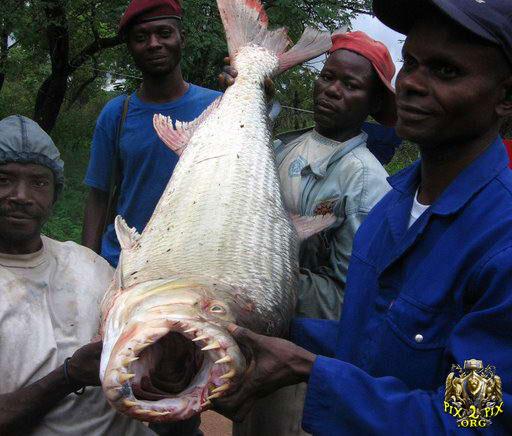 عكسهایی از عجیب و غریب ترین ماهیهای صید شده
