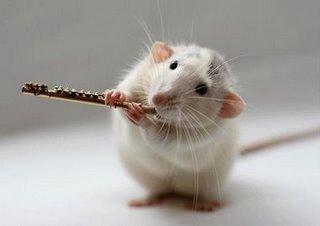 عکسهای خیلی ناز از موش های نوازنده
