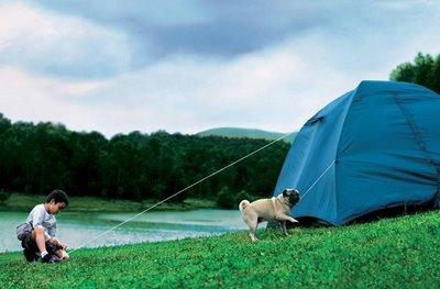 عکسهایی دیدنی از سگ خانگی باهوش