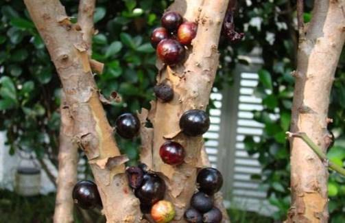 عکسهایی از باغهای انگور برزیلی