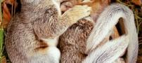 عکسهایی از حیوانات کوچولو و ناز