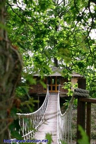 عکس خانه های ساخته شده روی درخت!!