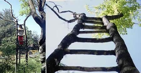 عکسهایی از درختان بسیار زیبا و عجیب