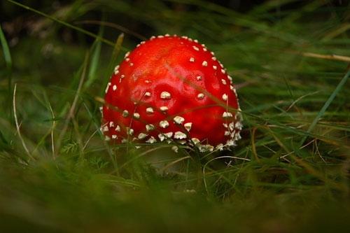 عکسهایی از زیباترین قارچ های جهان