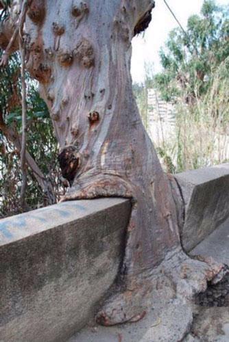 عکسهایی از قدرت درختان