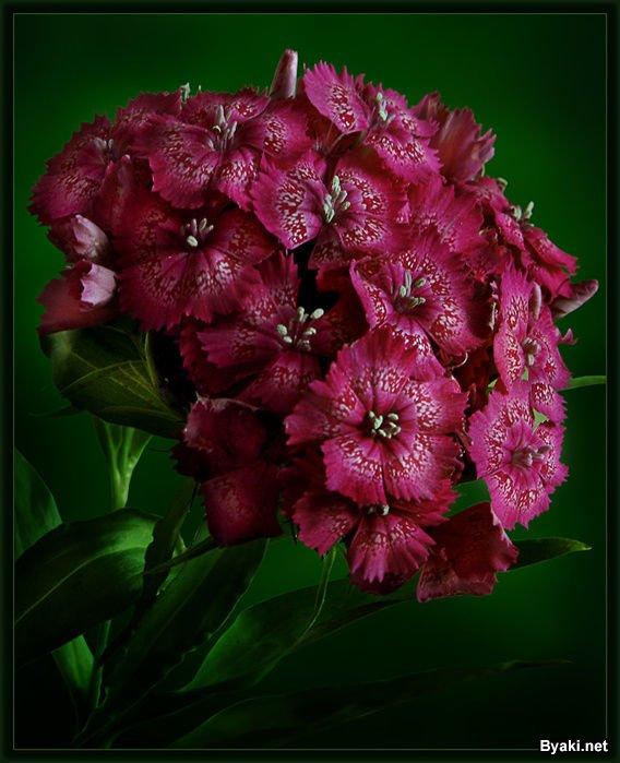 عکسهایی از گلهای بسیار زیبا