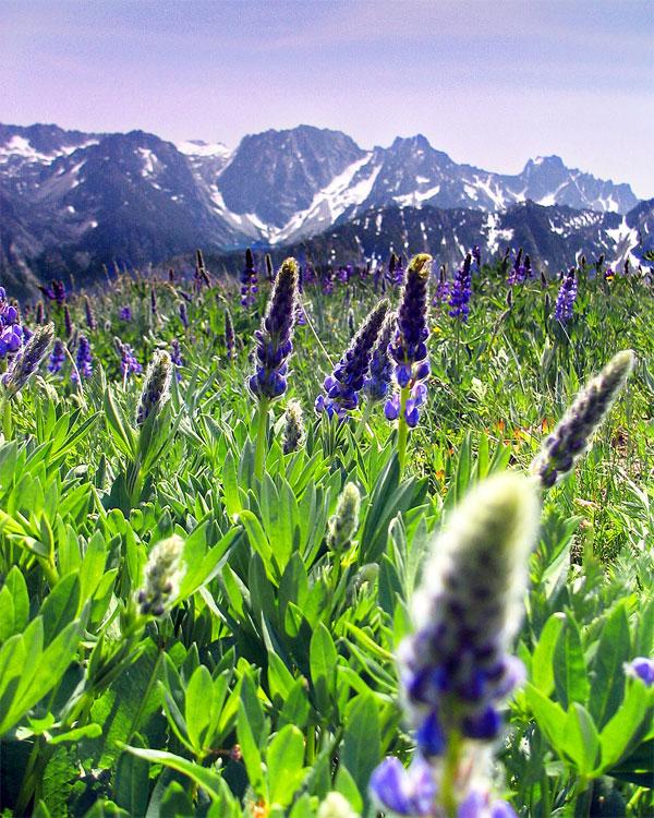 عکسهایی از گلهای بسیار زیبای بهاری